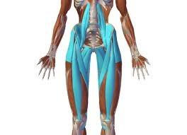 flexory