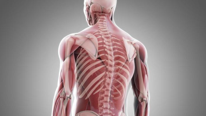 svaly a kosti