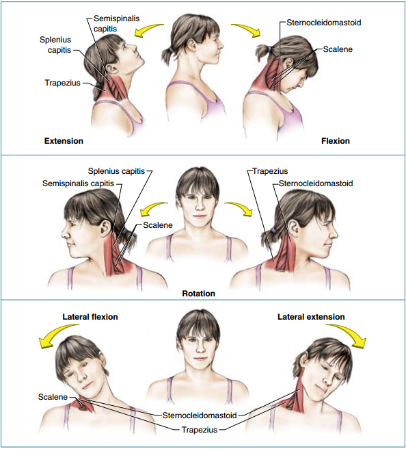 protažení krční zóny